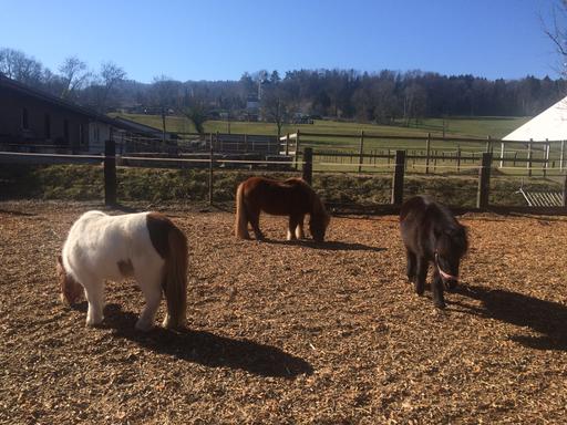 Lerne die Ponys kennen